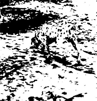 Gestalt_dog